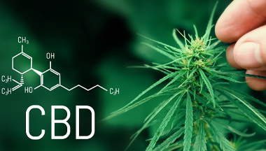 Lack Of CBD Safety Data Threatens Future Of Whole UK Industry