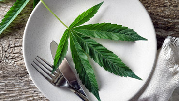 ACI Submits Novel Foods Application to FSA on Behalf of CBD Safety Consortium