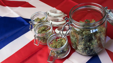 New Cannabis Industry Council Aims To Create A Single Unified Cannabis Voice For The UK
